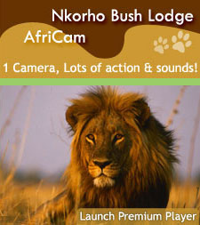 Click to Launch Premium Africam Player